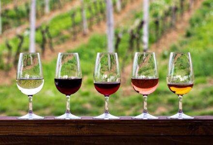 vini sostenibilità